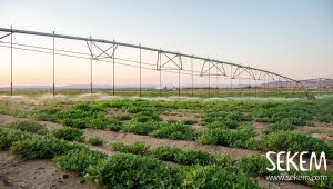 End Locust Plagues: Transform the Desert